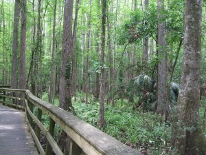 Cypress Swamp Trail